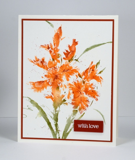 Orange iris Heather Telford