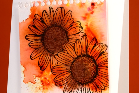 daisies detail Heather Telford