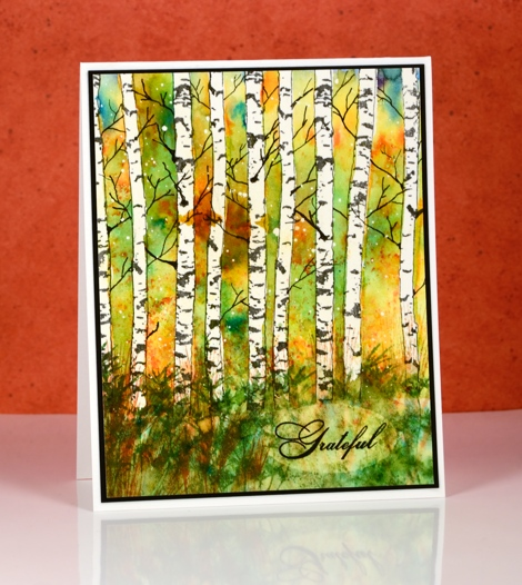 fall birch trees Heather Telford