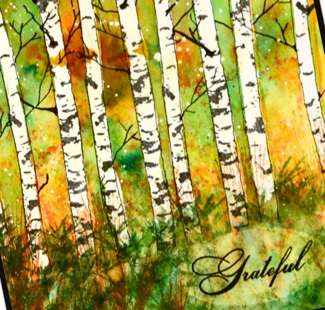 fall birch closeup Heather Telford