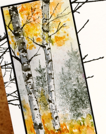 birch closeup Heather Telford