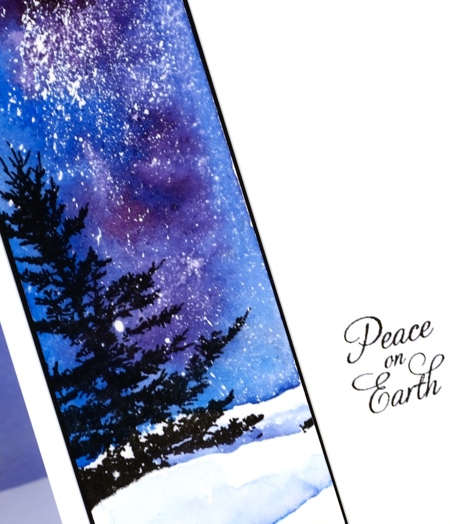 Glimpse of spruce closeup Heather Telford